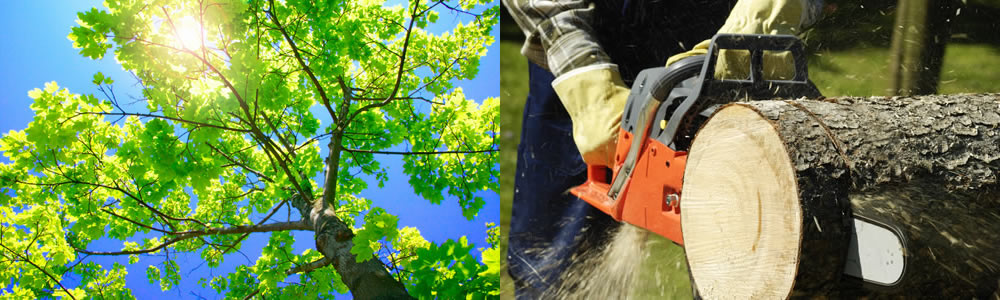 Tree Services Plattsmouth